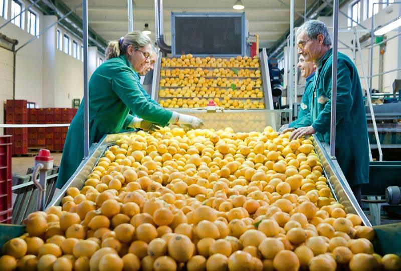 Agro Fruit SRL // European Business